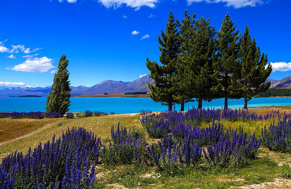 Lake Tekapo, Mackenzie Country, Canterbury, South Island, New Zealand, Pacific - 1214-14