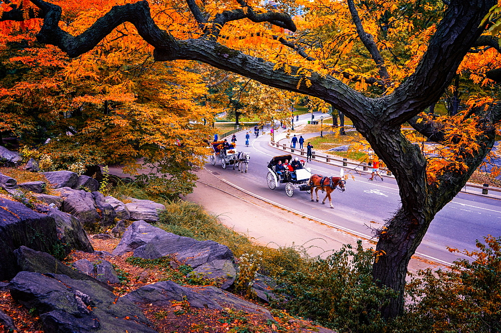 Carriage ride, Central Park, New York City, United States of America, North America - 1215-6