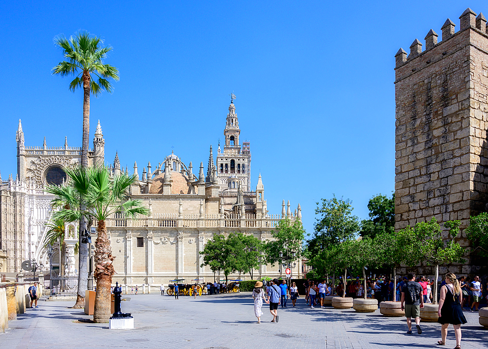 Cathedral of Sevilla, UNESCO World Heritage Site, Seville, Andalusia, Spain, Europe - 1216-524