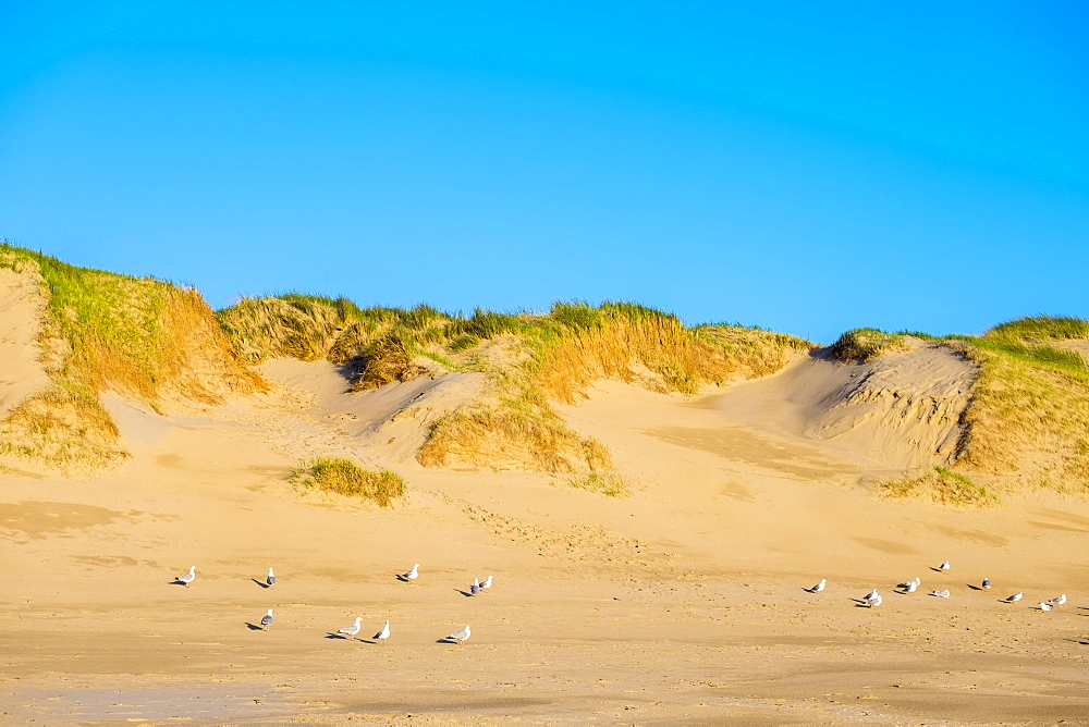 Dunes and beach on the North Sea, Julianadorp, North Holland, Netherlands, Europe - 1217-305