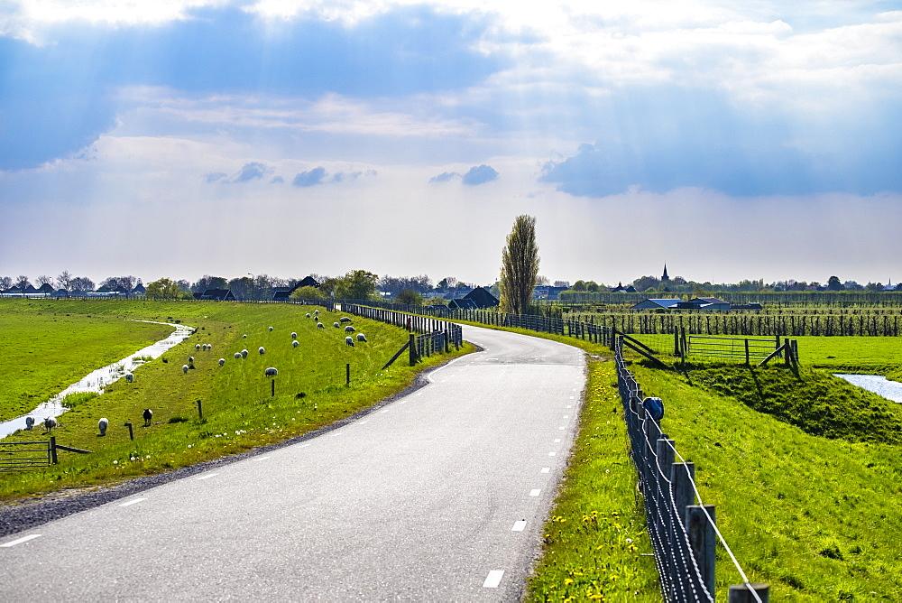 Winding rural road along the Zuiderdijk, Oosterleek, North Holland, Netherlands, Europe
