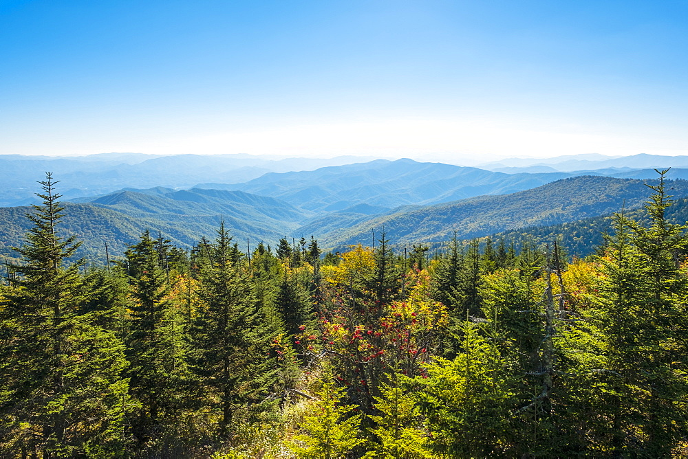 Great Smoky Mountains National Park, Clingmans Dome, border of North Carolina and Tennessee, North Carolina, United States of America, North America - 1217-448