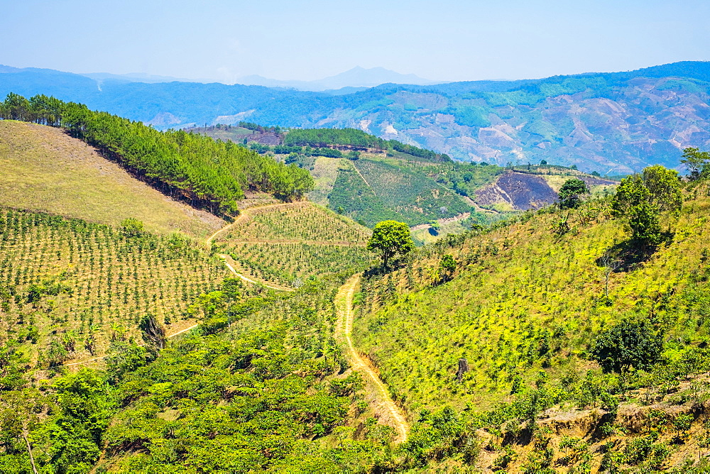 Coffee plantations in Central Highlands, Lam Ha District, Lam Dong Province, Vietnam, Indochina, Southeast Asia, Asia