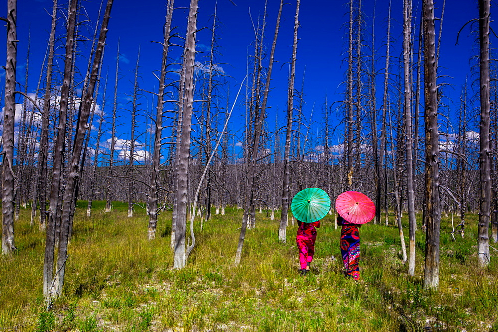 Two girls with parasols in Burnt Forest, Yellowstone National Park, Wyoming, United States of America, North America