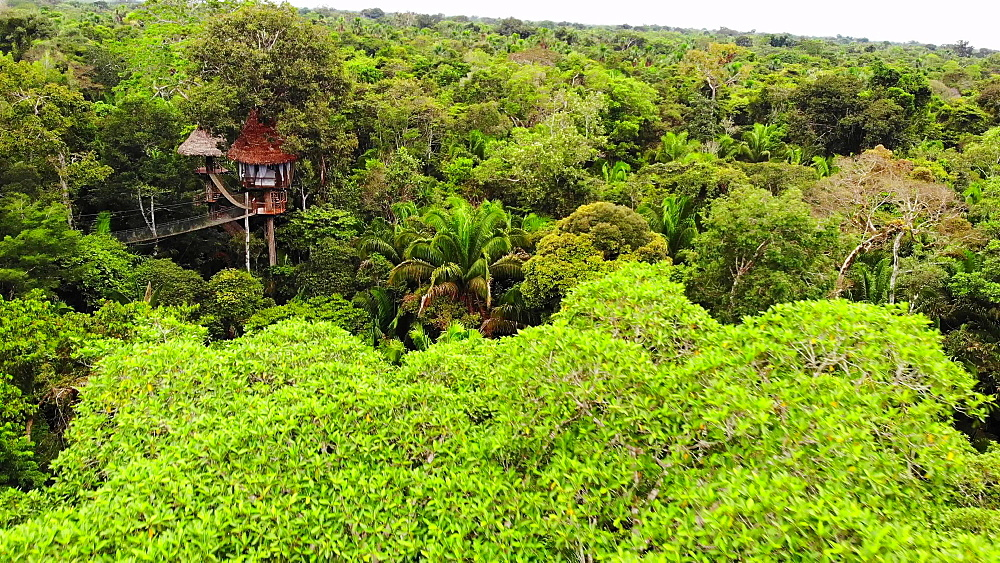 Aerial drone shot of the treehouses at the Treehouse Lodge, Iquitos, Amazon, Peru, South America - 1218-1260