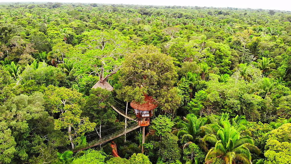 Aerial drone shots of the treehouses at the Treehouse Lodge