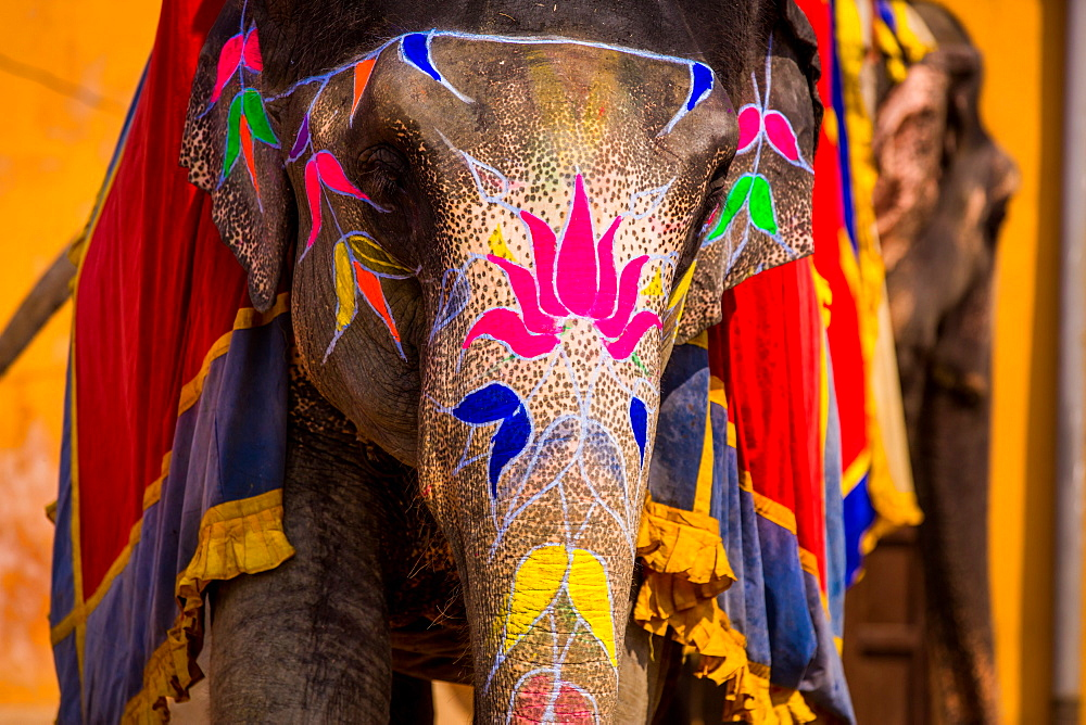 Painted elephant, Amer Fort, Jaipur, Rajasthan, India, Asia