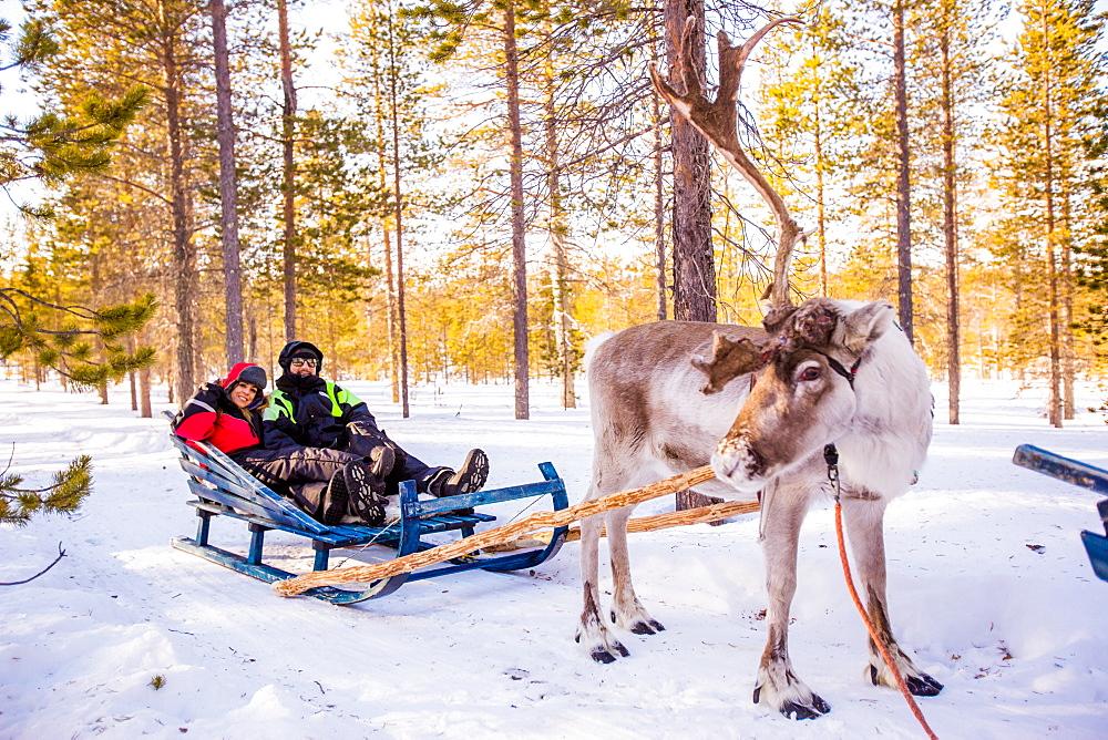Couple on Reindeer Safari, Kakslauttanen Igloo Village, Saariselka, Finland, Scandinavia, Europe