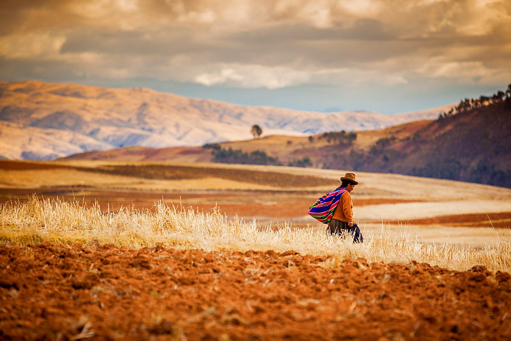 Farmer walking home at sunset, Sacred Valley, Peru, South America - 1218-29