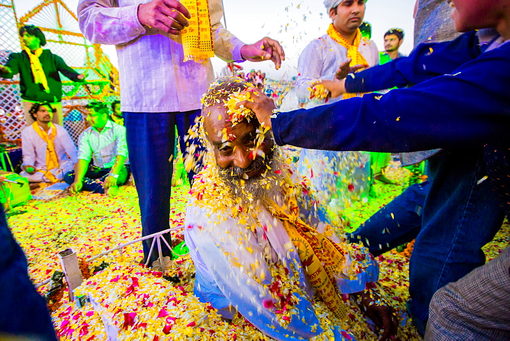 Guru getting flower petals thrown over his face during the Flower Holi Festival, Vrindavan, Uttar Pradesh, India, Asia