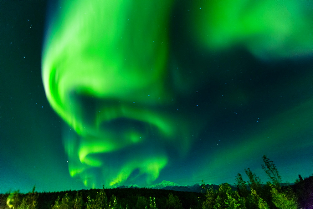 Aura Borealis (Northern lights) in Denali Wilderness National Park, Alaska, United States of America, North America