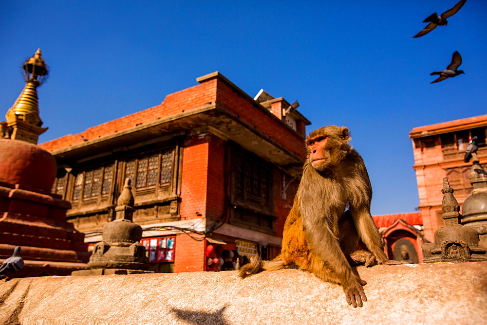 Sacred Monkey Temple, Kathmandu, Nepal, Asia