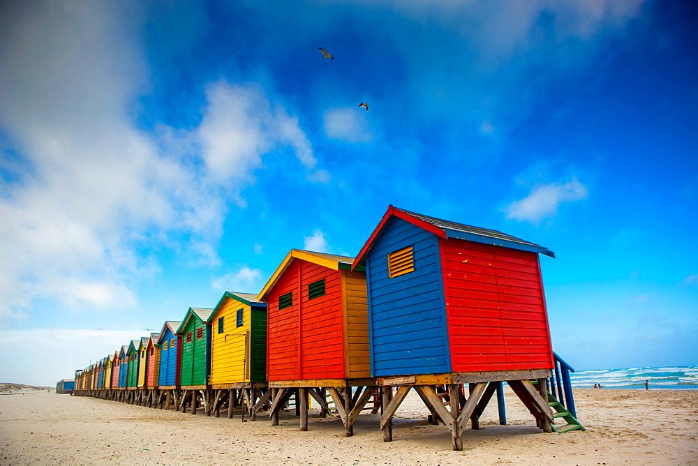 Colorful beach shacks, Muizenberg Beach, Cape Town, South Africa, Africa - 1218-62