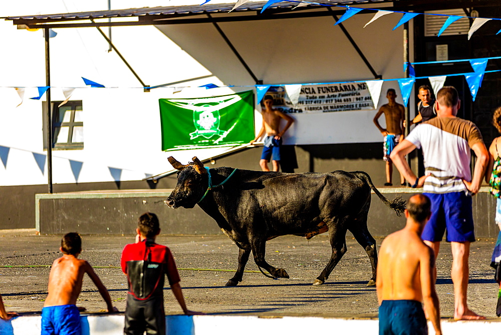 'Running of the Bulls' in Sao Mateus village on Terceira Island. - 1218-746