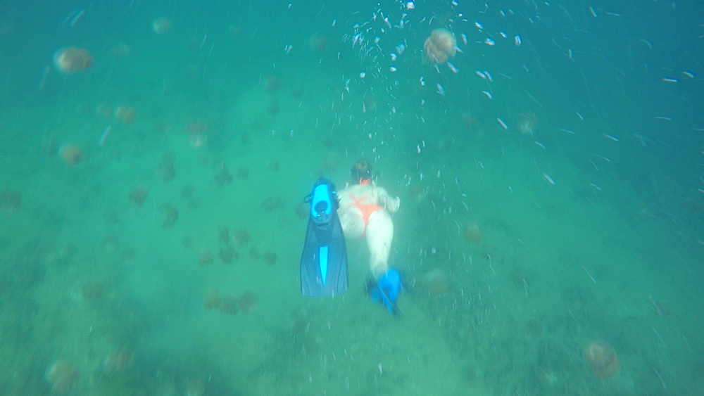 Jelly Fish Lake ? Go Pro Underwater Snorkeling with jellyfish - 1218-944