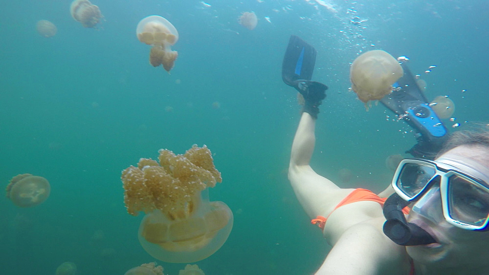 Jelly Fish Lake ? Go Pro Underwater Snorkeling with jellyfish - 1218-950
