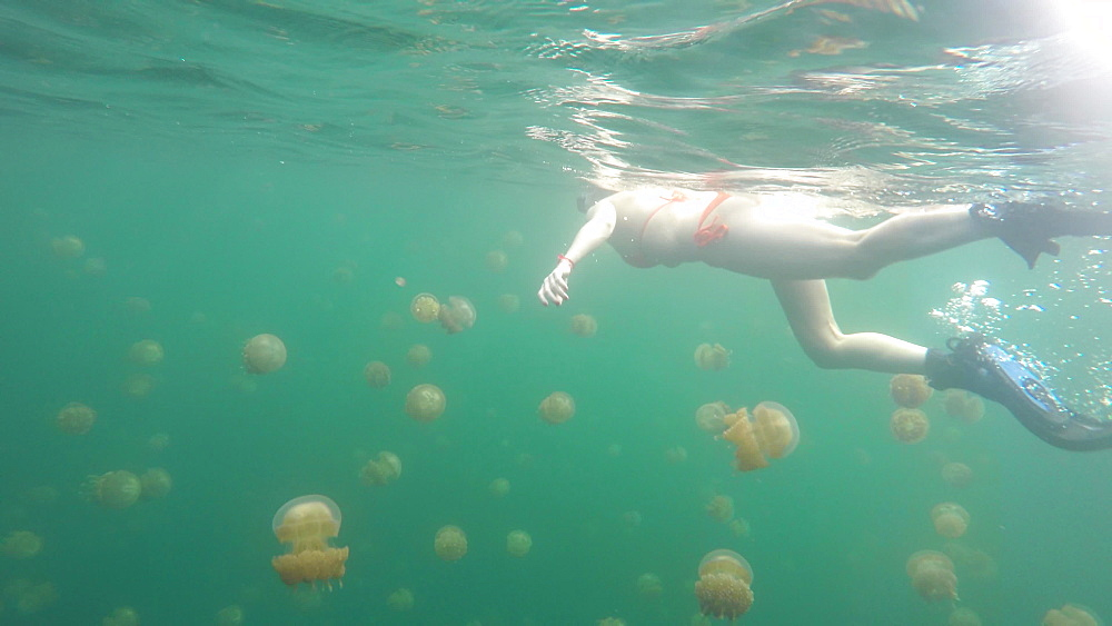 Go Pro Underwater Snorkeling with jellyfish, Jellyfish Lake, Palau, Caroline Islands, Micronesia, Pacific