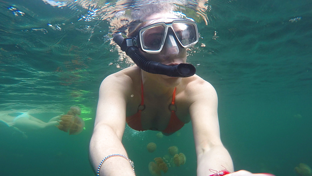 Jelly Fish Lake ? Go Pro Underwater Snorkeling with jellyfish - 1218-957