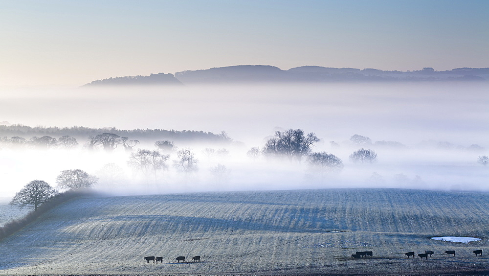 Beeston Castle and Peckforton Hills rise above a blanket of mist and fog covering the Cheshire plain on a frosty winters morning, Cheshire, England, United Kingdom, Europe
