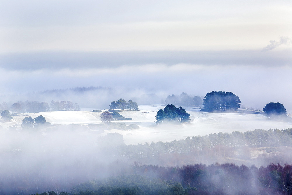 Winter fog clearing to reveal frost and snow across the Delamere forest landscape, Cheshire, England, United Kingdom, Europe - 1219-131