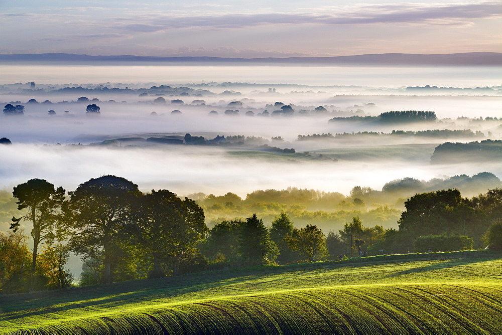 Rolling fields extend from Eddisbury Hill to the dawn landscape with autumn mist lying on the Cheshire plain, Cheshire, England, United Kingdom, Europe - 1219-133