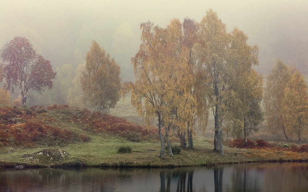 Autumn colour along the shore of Loch Tummel with mist lingering in the valley, Scottish Highlands, Scotland, United Kingdom, Europe - 1219-184