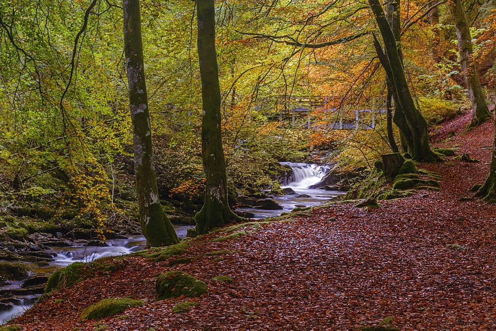 Autumn in the Birks of Aberfeldy, Scottish Highlands, Scotland, United Kingdom, Europe