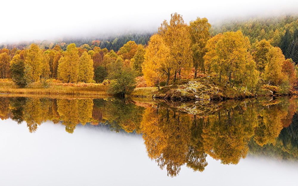 Golden colour of autumn with trees and fog reflected in Loch Tummel, Pitlochry, Perthshire, Scotland, United Kingdom, Europe - 1219-189