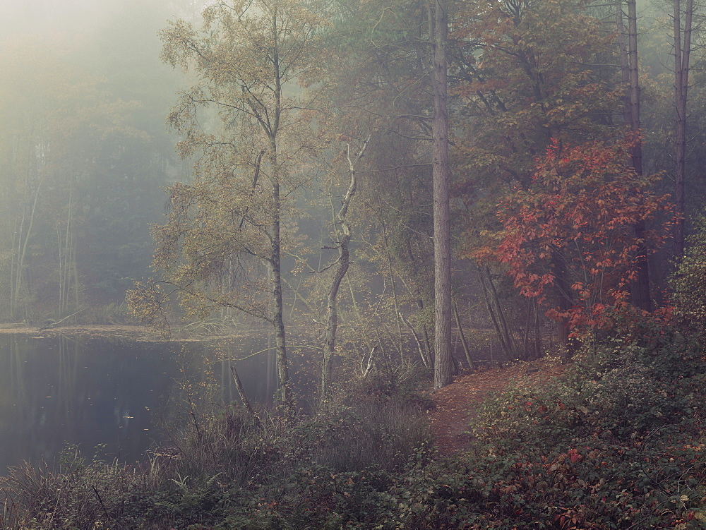 Autumn fog descends into the trees surrounding Dead Lake in Delamere Forest, Cheshire, England, United Kingdom, Europe