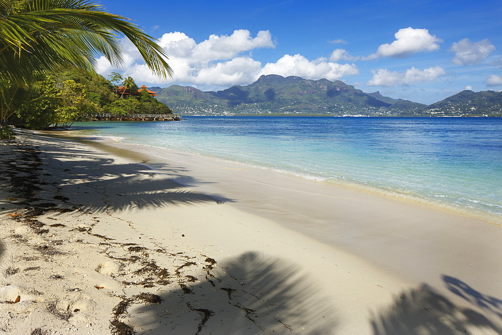 Palm trees providing shade along a deserted sandy beach in the Seychelles, Indian Ocean, Africa