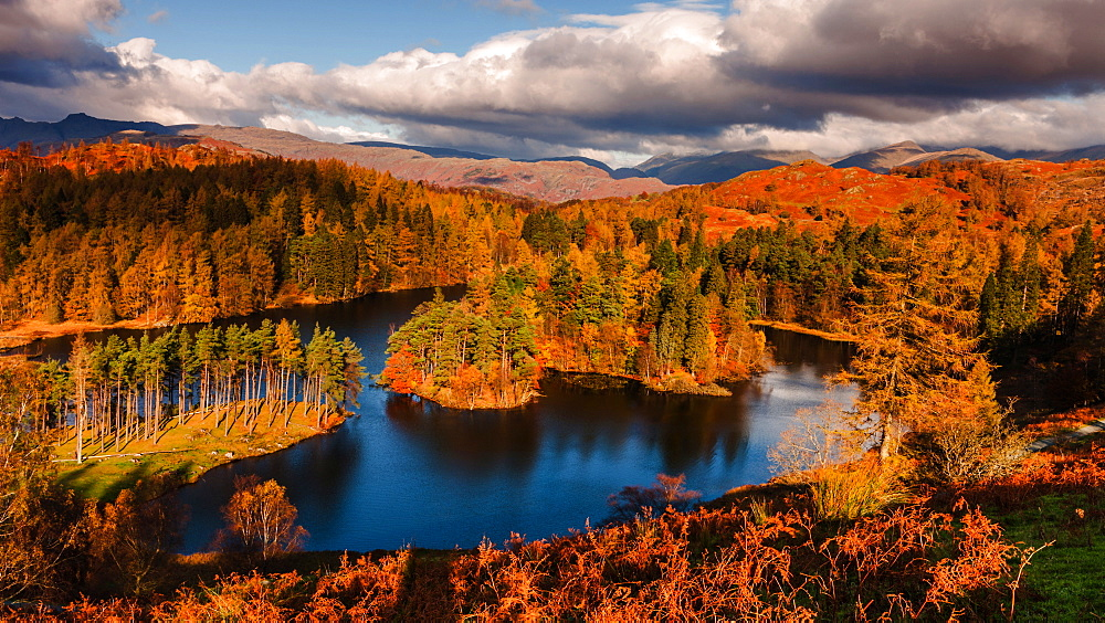 Autumn morning at Tarn Hows in the Lake District National Park, Cumbria, England, United Kingdom, Europe - 1219-97