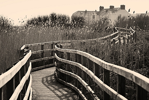 Rushes and boardwalk in sunlight around the Maelog Lake at Rhosneigr, Anglesey, Wales, United Kingdom, Europe