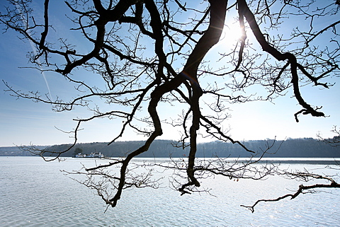 Looking through trees in early morning sunshine towards the island of Ynys Gorad Goch on the tidal Menai Strait, Anglesey, Wales, United Kingdom, Europe