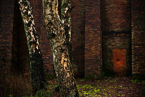 Old industrial buildings gradually being reclaimed by nature in this urban woodland near Northwich, Cheshire, England, United Kingdom, Europe