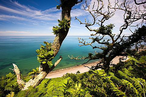 Long shingle beach through ancient woodland at Nant Gwrtheyrn on the North Wales coast, Wales, United Kingdom, Europe