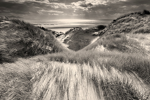 Extensive marram grass covered sand dunes at Llanddwyn Beach, Anglesey with sunlit Irish Sea beyond, Wales, United Kingdom, Europe