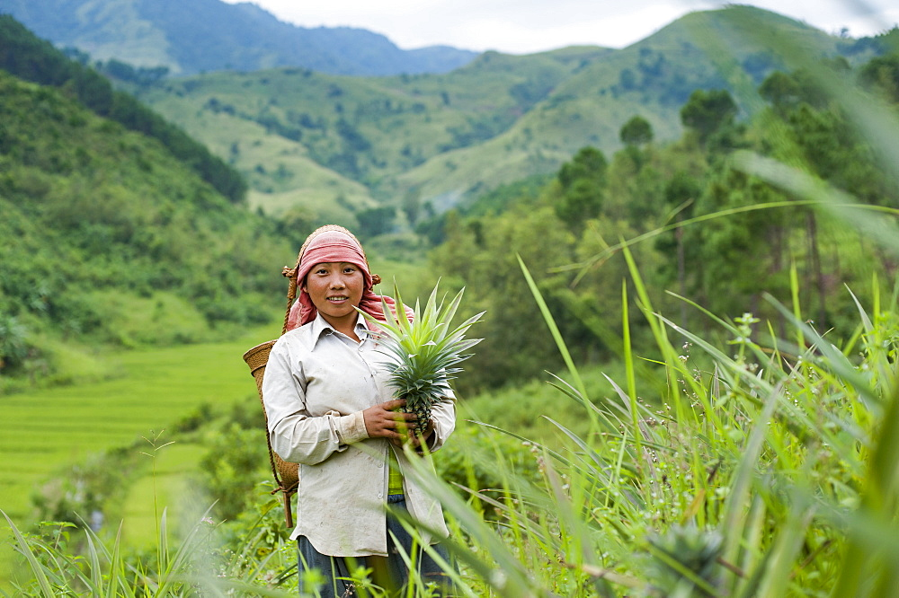 A girl harvests pineapples in Northeast India, India, Asia