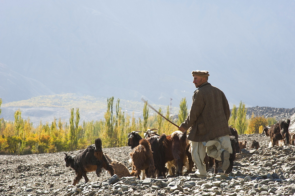 A shepherd in the remote Bagrot Valley, Gilgit-Baltistan, Pakistan, Asia
