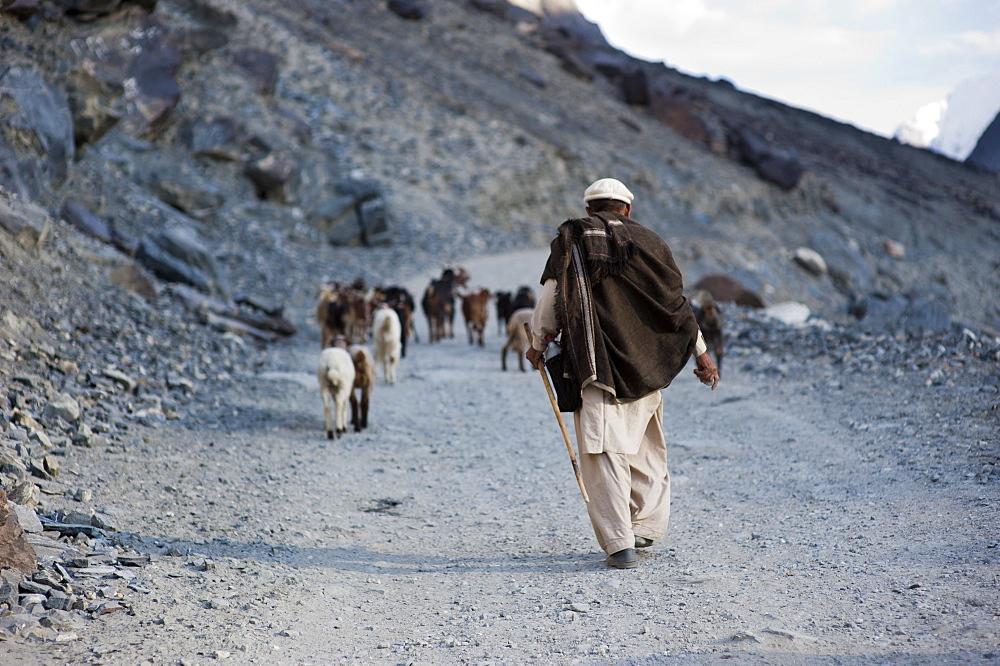 A shepherd near Gilgit, Pakistan, Asia