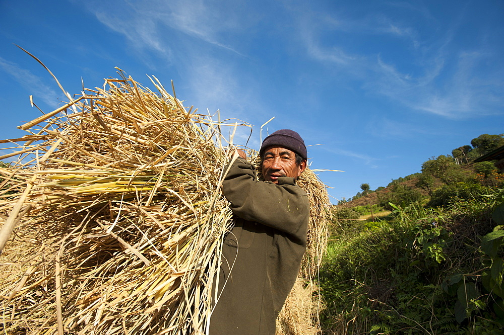 A man holds up a bundle of freshly harvested rice in Bhutan