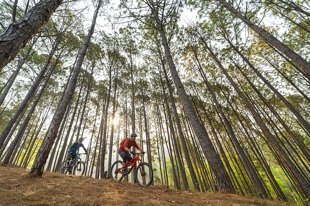 Mountain bikers descend through a forest at sunrise, Nuwacot, Nepal, Asia