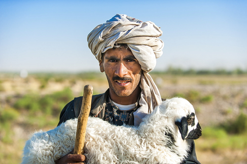 A Kuchi shepherd near Herat in Afghanistan returns a lost lamb back to its flock, Afghanistan, Asia
