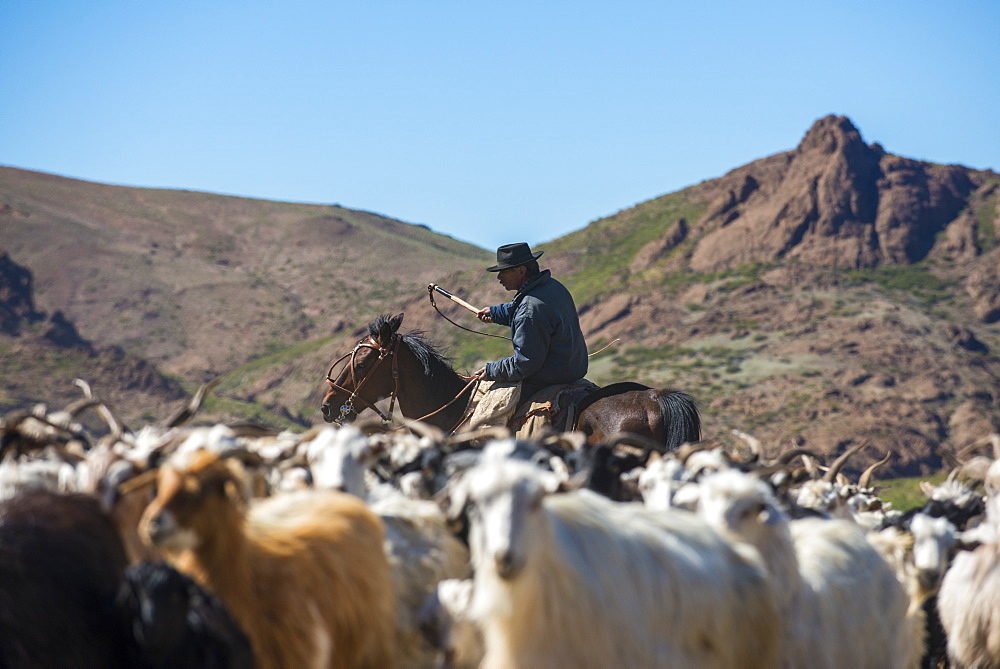 Gaucho on horseback herding goats along Route 40, Argentina, South America