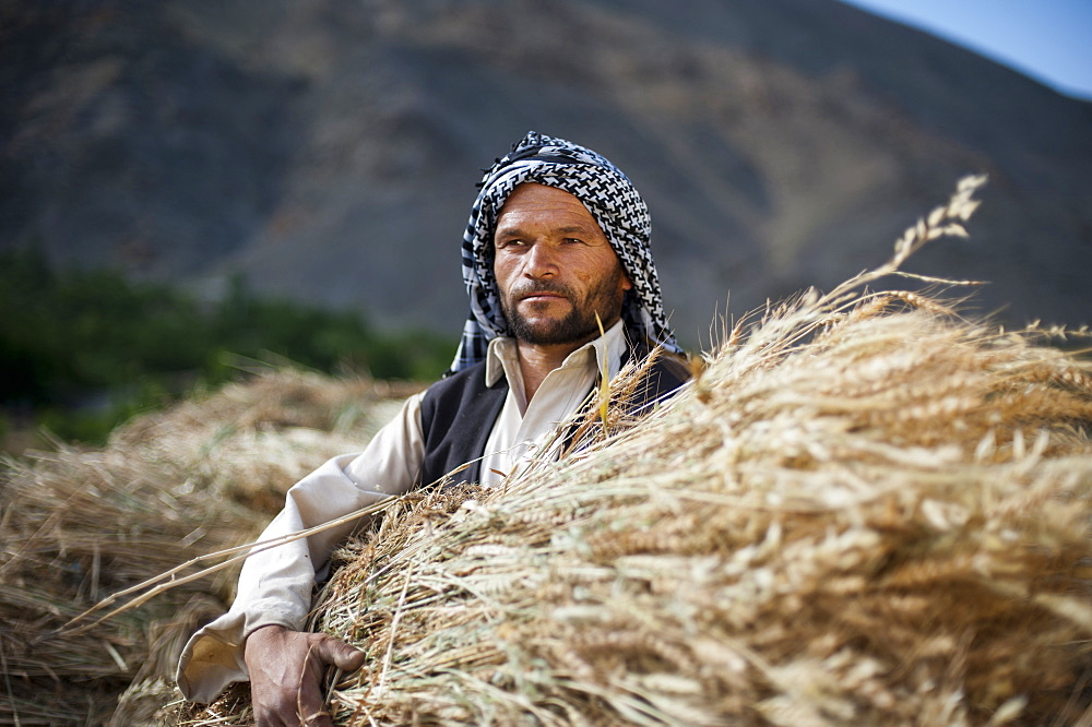 An man from the Panjshir valley in Afghanistan holds a freshly harvested bundle of wheat