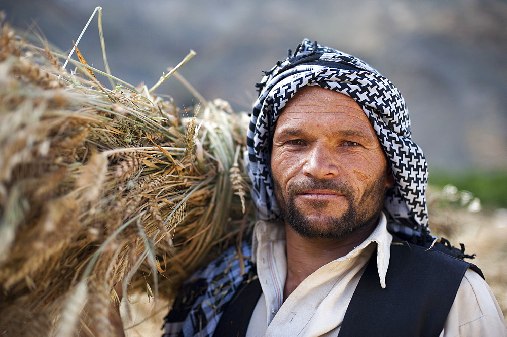 An Afghan man from the Panjshir valley holds a freshly harvested bundle of wheat
