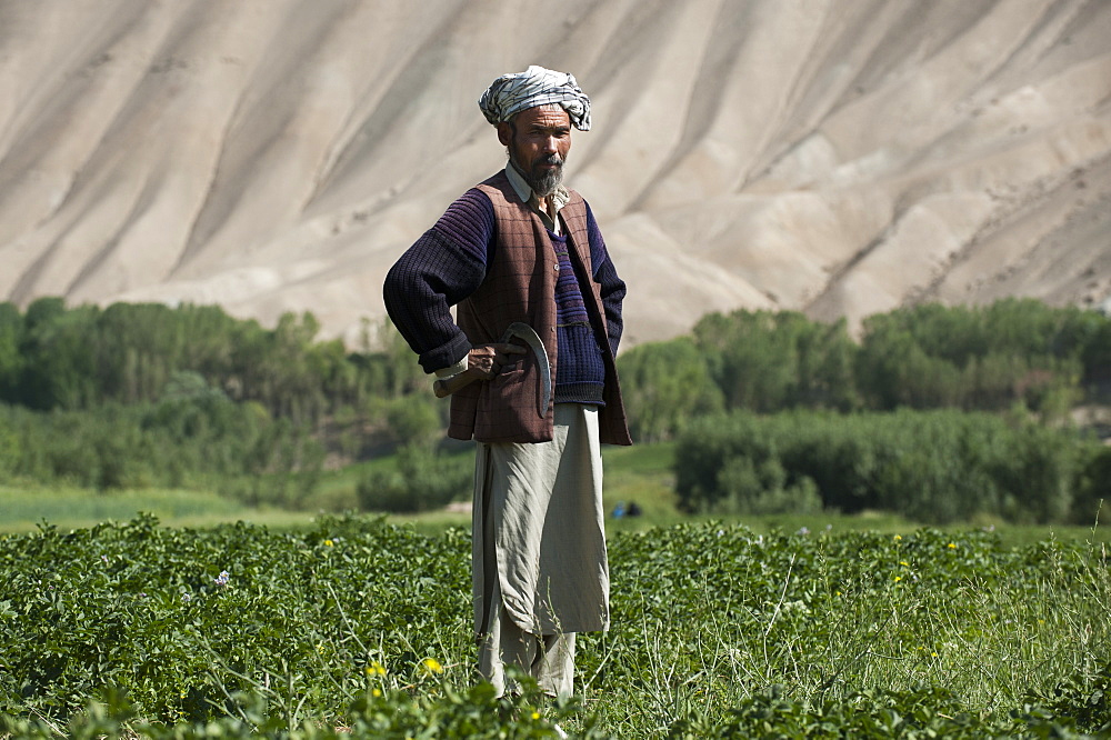 The barren hills of the Bamiyan valley in central Afghanistan appear to promise little, but snowmelt irrigates the fields, Bamiyan Province, Afghanistan, Asia