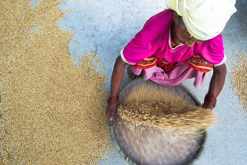 Woman panning rice (winnowing) so the unwanted husks fly out of the pan leaving the grains of rice inside, Dolghat, Nepal, Asia - 1225-697
