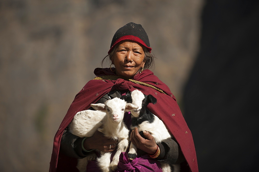 A woman carries lambs back to their mother, Tsum Valley, Nepal, Asia