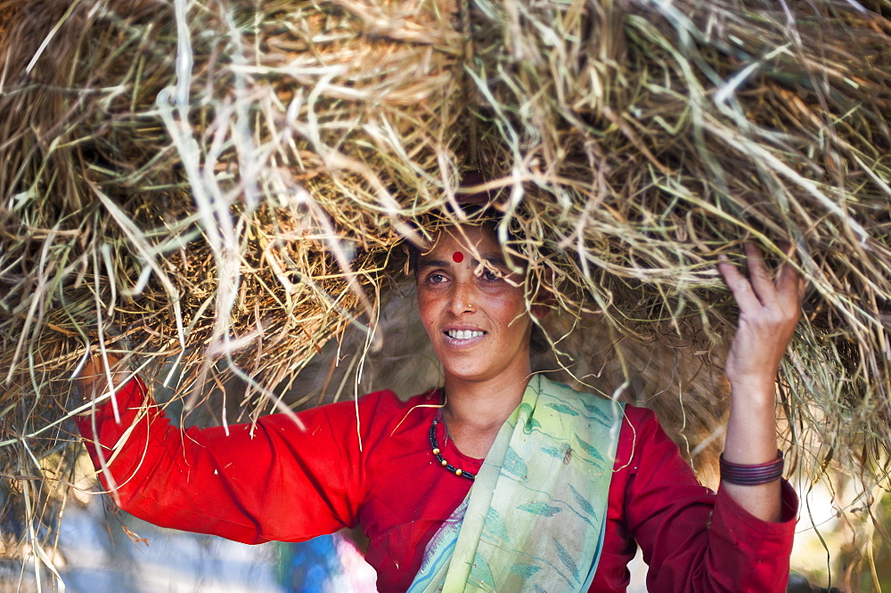 A woman carries a big pile of fodder home to feed the animals in India