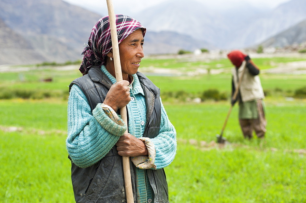 Women work with irrigation tools to even the flow of water into their wheat field in Ladakh in India